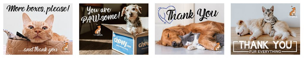 Thank You Cards featuring dogs and cats