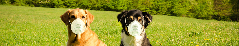 Dogs wearing masks
