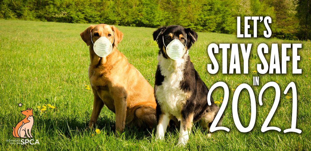 dogs wearing masks for safety