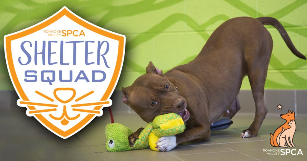 Shelter Squad Logo with pit mix dog and toy